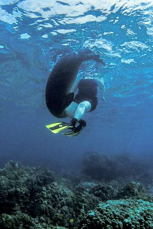 Endangered Hawaiian monk seal, Monachus schauinslandi, or 'ilio-holo-i-ka-uaua (H), cavorts with snorkeler Kristi Wheeler at Honaunau Bay, Big Island of Hawaii ( Central Pacific Ocean )