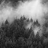 San Lorenzo Valley Rain Clouds