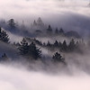 Santa Cruz Mountains Fog