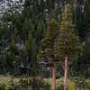 Elizabeth Lake, Trees, and Granite