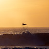 Pelican and Wave