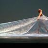 Jillian Katterhagen '15, of the W&L Repertory Dance Company, performing in the Lenfest Center.