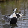 wildfowl and wetlands trust london