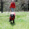 Larimer County SAR Dog Training Session