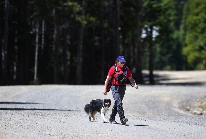 "Terrie Kirkpatrick with Front Range Rescue Dogs searches Eldora Mountain Resort with Tia, an English shepherd, one of four dogs involved in the search for human remains at the ski resort on Thursday.  <br /> More photos:  <a href=""http://www.dailycamera.com"">http://www.dailycamera.com</a><br /> Autumn Parry/Staff Photographer<br /> June 2, 2016"