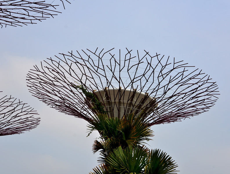 Supertrees in Garden by the Bay, Singapore