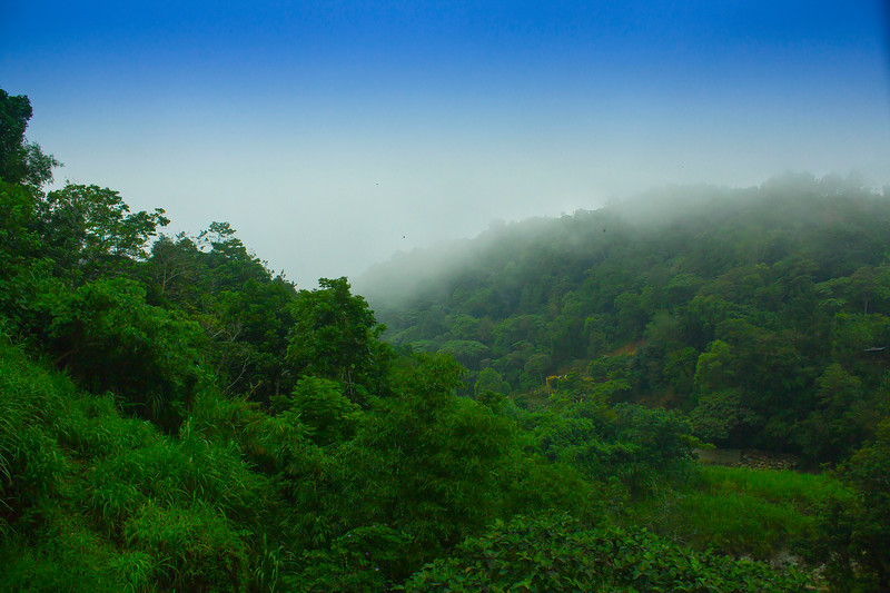 Tuba Forest