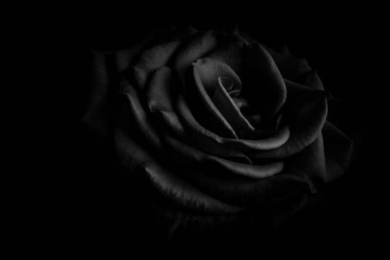Dark Rose_bw