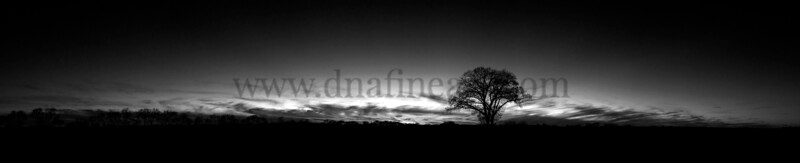 Sunset Tree BW