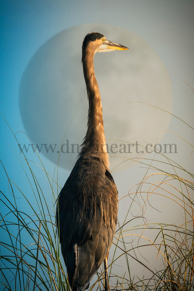 Horizon Heron