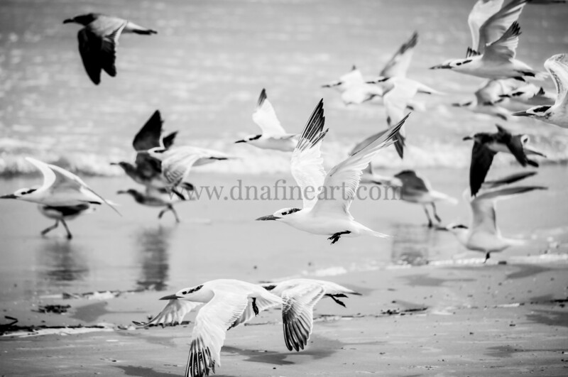 Flying Terns 2