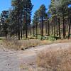 Along NM 501