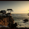 Lone Cypress Tree at 17 mile drive
