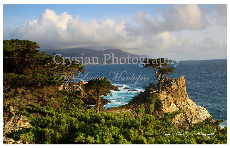 Lone Cypress Tree, the icon of Pebble Beach