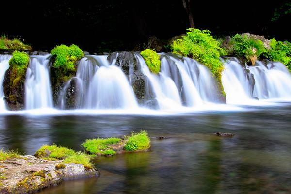 Flow Murmuring