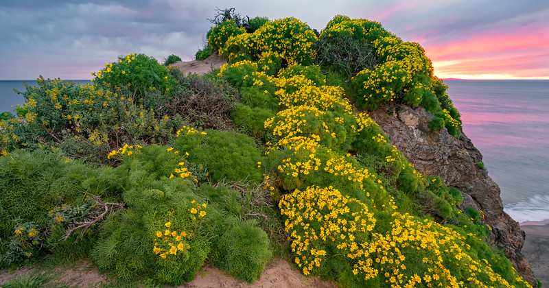 sunset and wildflowers over Point Dume