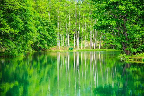 Green in Summer, Niseko