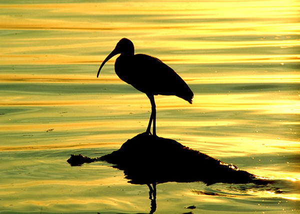 """""""Sunbird II"""" (photography) by Joel McEachern"""