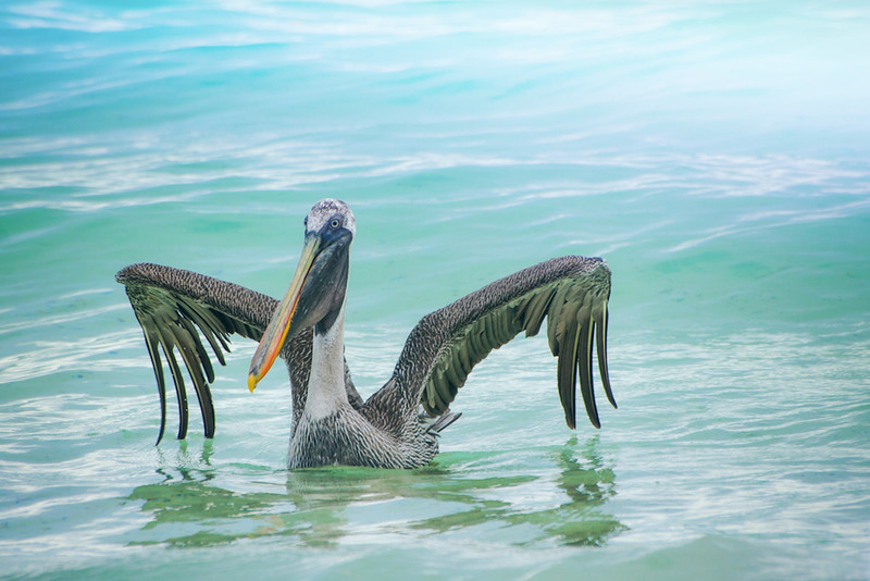 """King of the Beach"" (photography) by Kirsten Fenton"