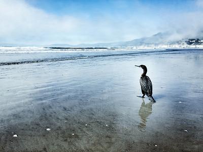 """""""Sir Bird"""" (photography) by Kirsten Fenton"""