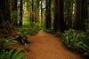Redwood Trail ...