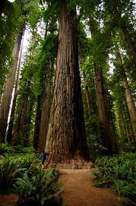 """ Redwood ... """