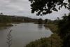 Riverhead Tidal Mangroves
