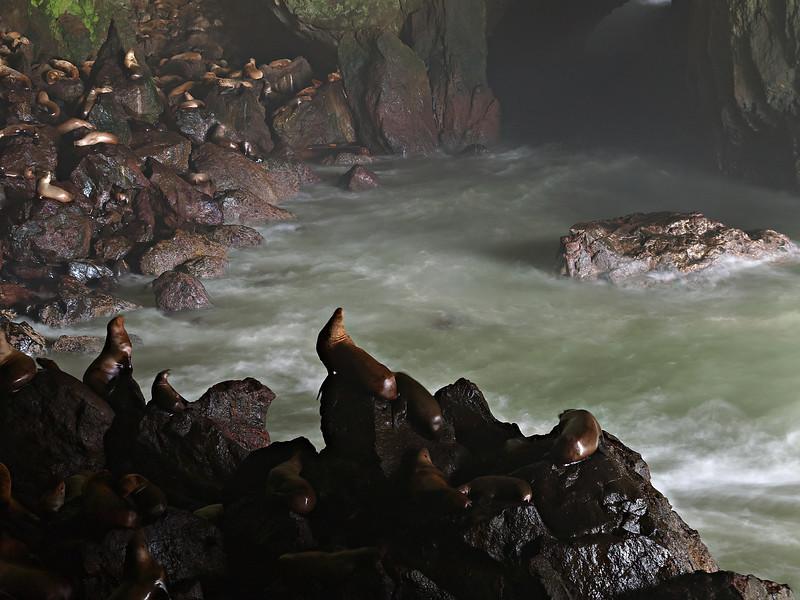 Sea Lion Cave III - Oregon Coast
