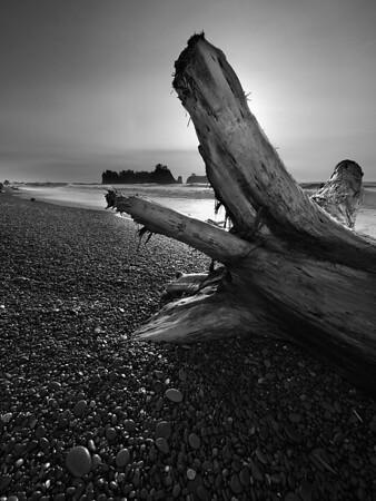 Fallen II - Rialto Beach - Washington Coast