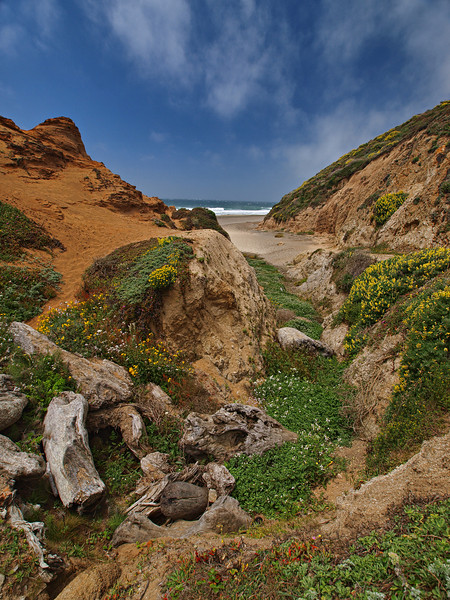 The End of the Trail - McClures Beach at Pt. Reyes