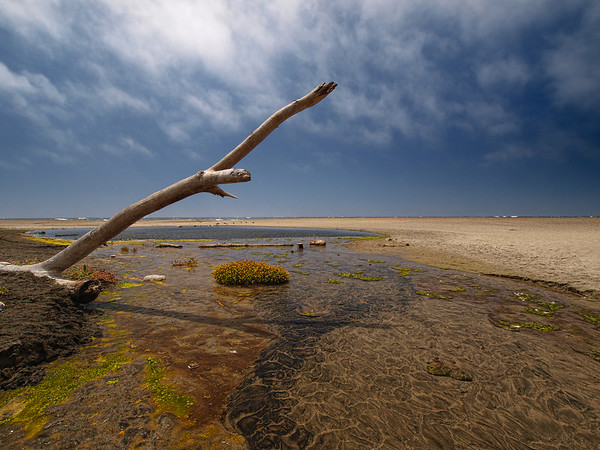 The Sand, The Tree and The Sea - McClures Beach, Pt. Reyes