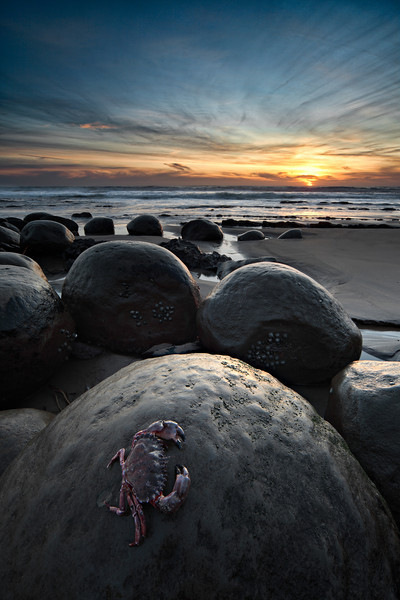 - Crustacean Twilight -  Bowling Ball Beach, Mendocino Coast
