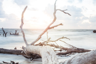 black rock beach florida ocean water long exposure sunrise driftwood golden hour high key
