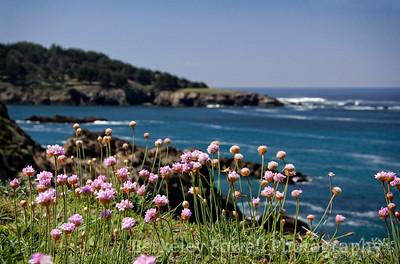 Spring Flowers on the Headlands