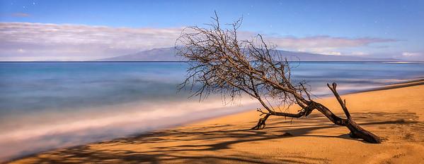 Kannapali Beach Branch, Study 2, Maui, Hawaii