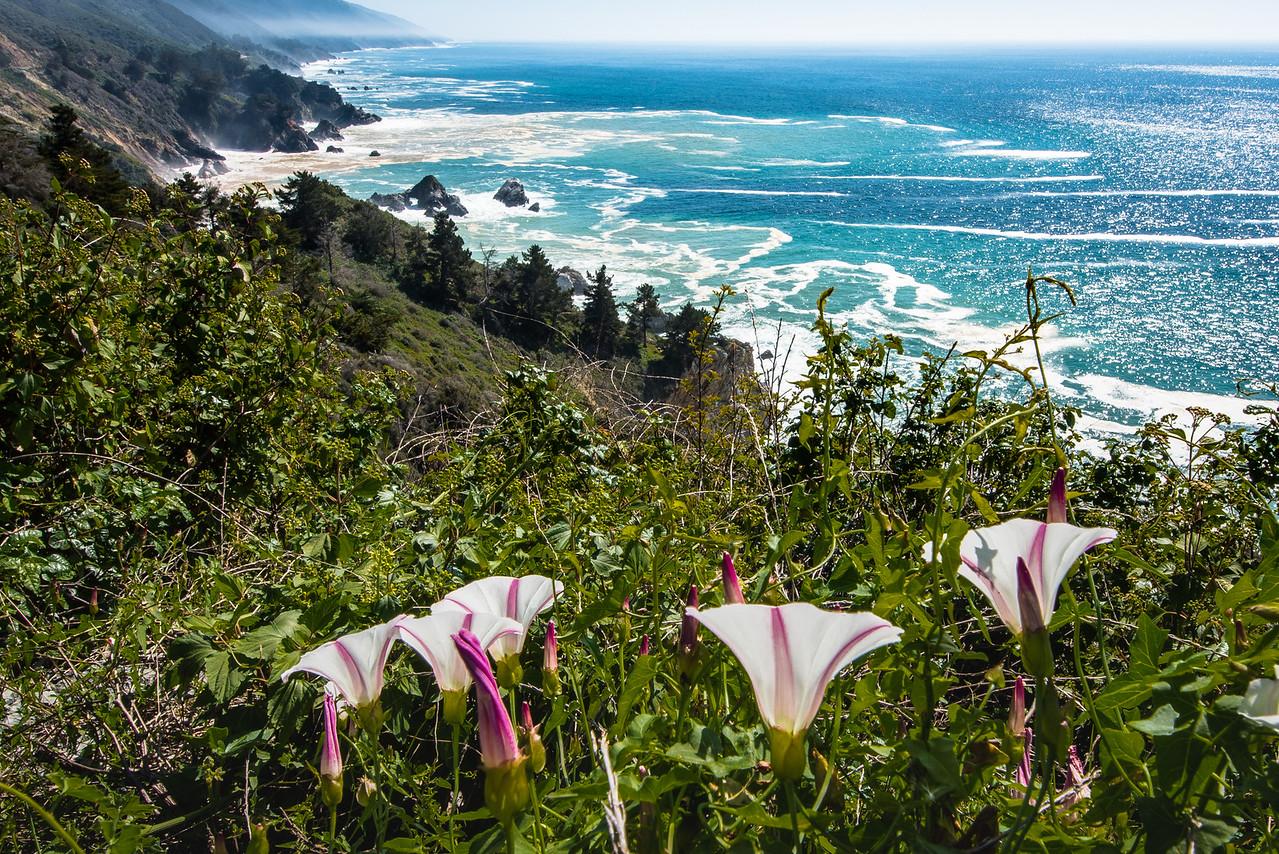 Morning Glories, Big Sur