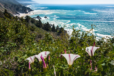Morning Glories, Big Sur