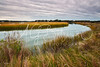 Lynnhaven River Marsh