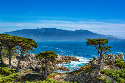 Haze and the Lone Cypress