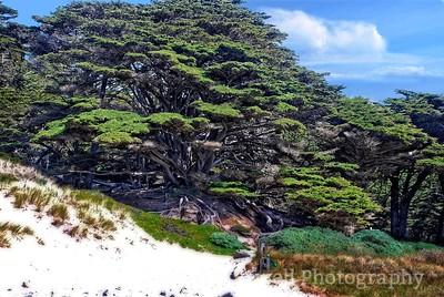 Big Cypress Path to Pfeiffer Beach