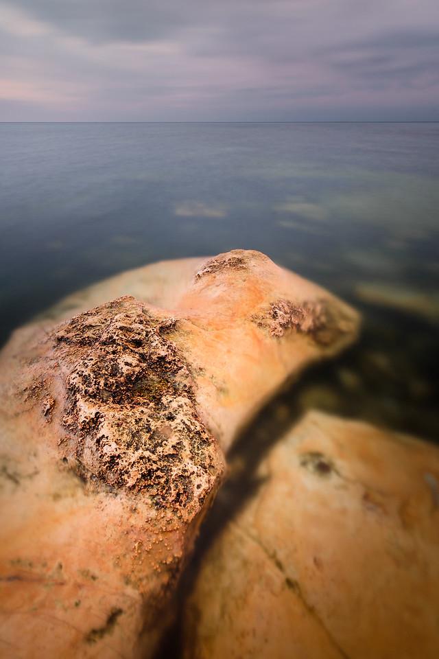 CORAL IN BALTIC SEA
