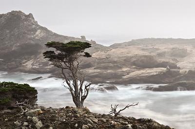 Headlands Cove, Point Lobos, California