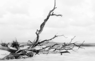 black rock beach florida ocean water long exposure driftwood high key black and white fantasy
