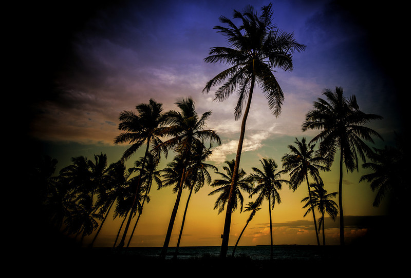 The Coconut Trees