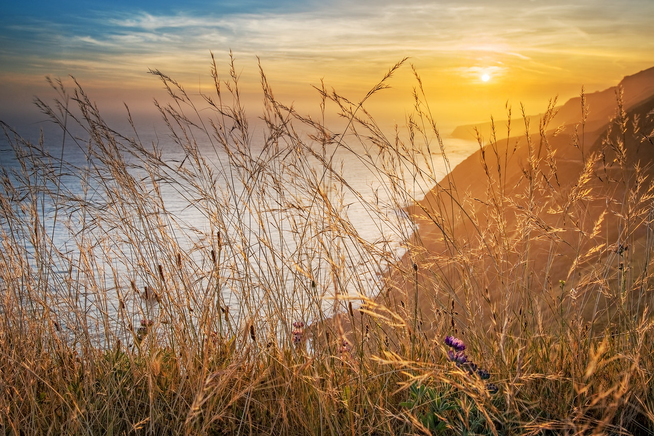 Sunset Grass, Sonoma Coast, California