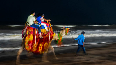 B12:A family taking a joyride on camel back in the evening on the beach in Puri,Odissa