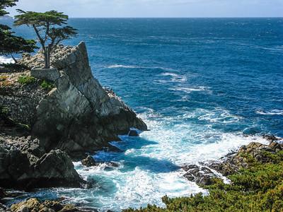 Sentinel Cypress