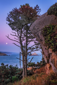 Moon & Cypress, Havens Neck, Gualala, California