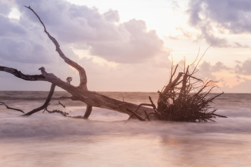 black rock beach florida ocean water long exposure sunrise driftwood golden hour
