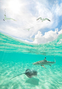Shark and Ray